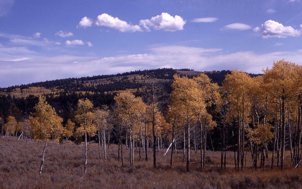 Fall color on Bunsen Peak loop drive Photo