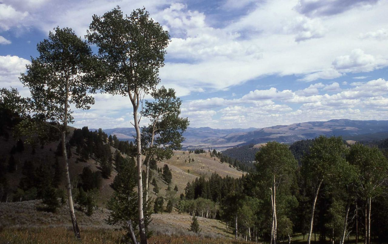 Specimen Range near Tower Photo