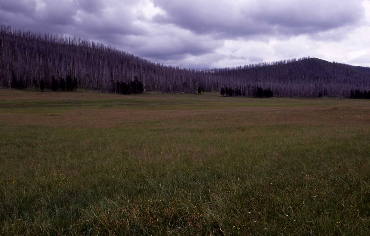 Meadow northeast of Mist Creek Pass trail Photo