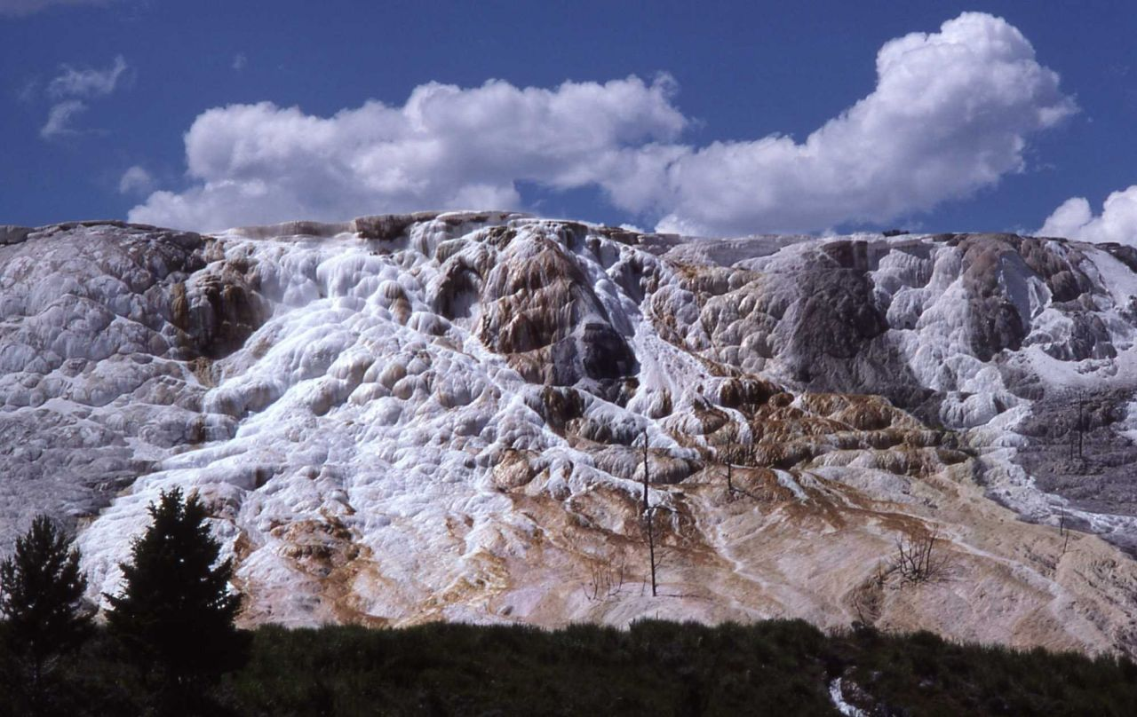 Main Terrace - Mammoth Hot Springs Photo