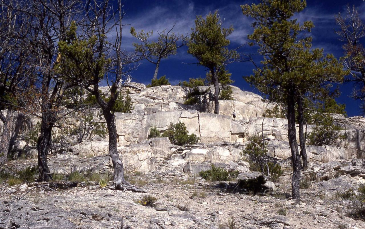 Extinct hot springs - Mammoth Hot Springs Photo