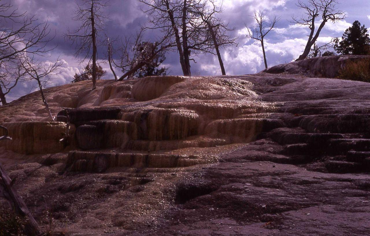 Mammoth Terraces - Mammoth Hot Springs Photo