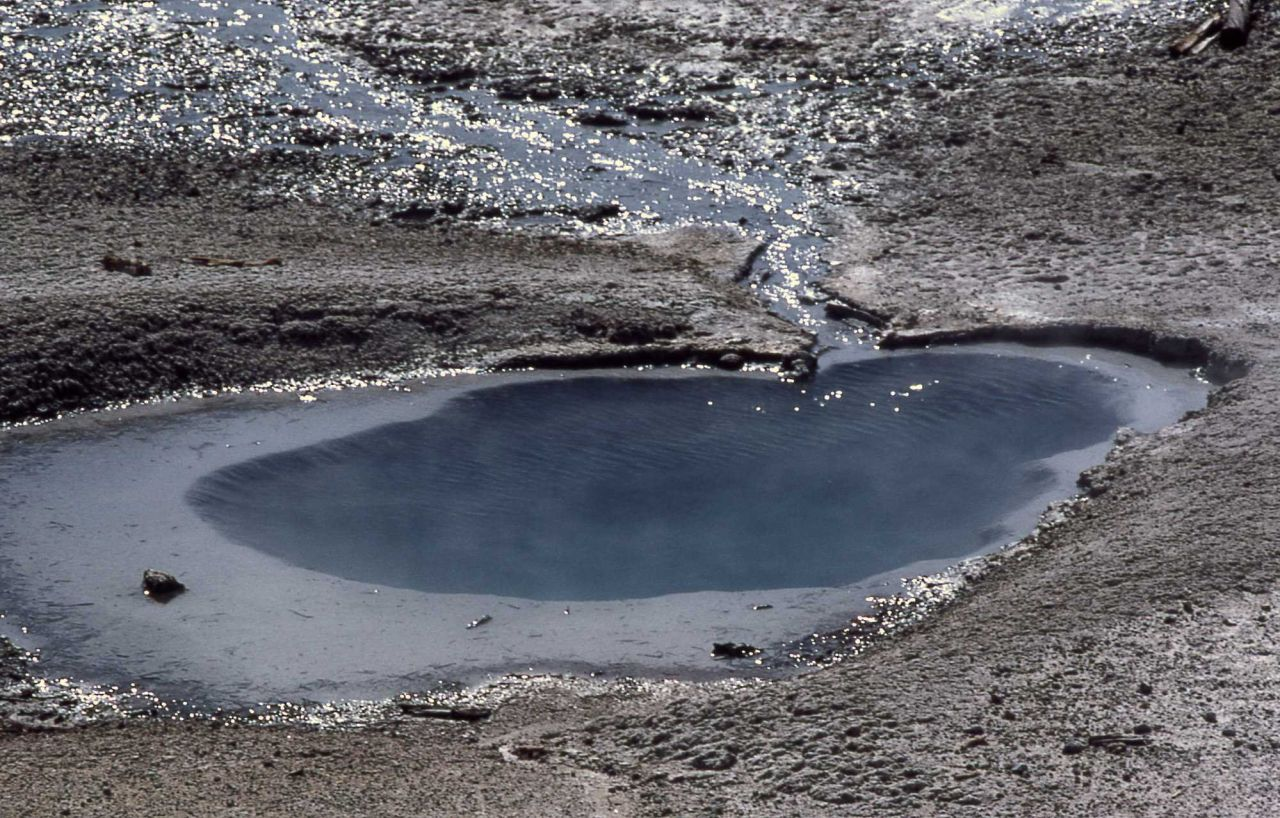 Pool/spring in the Tangled Root Complex - Hot Springs, Norris Geyser Basin Photo