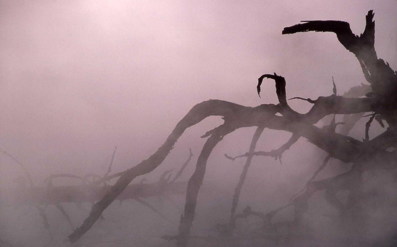 Seismic Geyser - dead tree & steam Photo