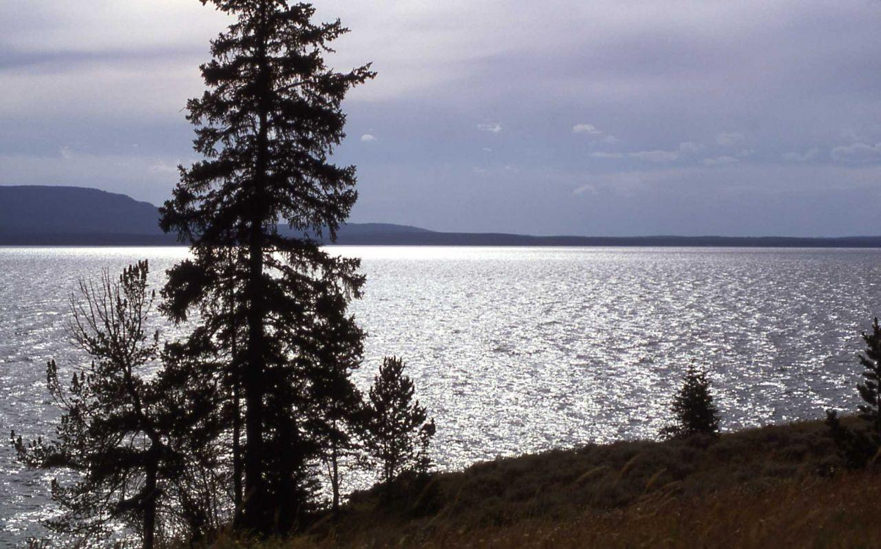 Trees along shore of Yellowstone Lake Photo