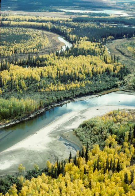 Fall on the Yukon Flats NWR Picture