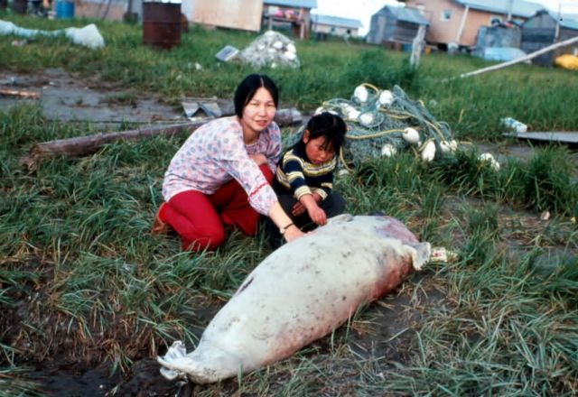 Seal - Subsistence Picture