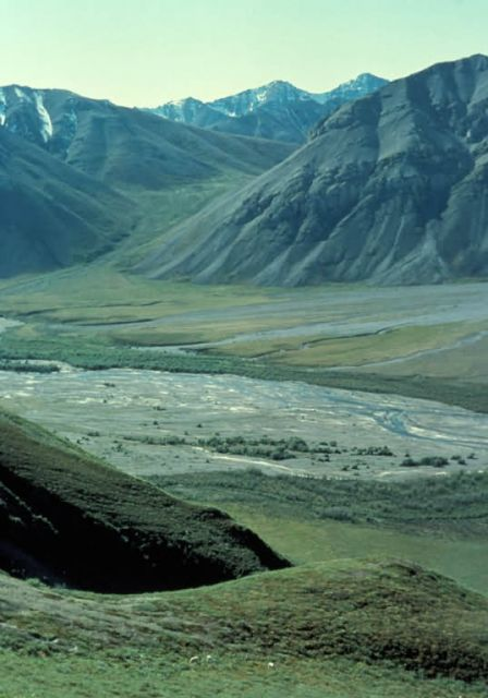 Dall Sheep and Sheenjek River Picture