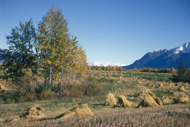 Matanuska Valley Hay Field Picture