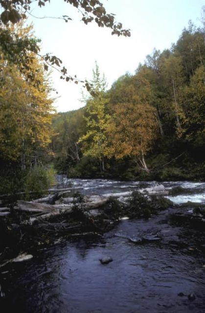 Russian River Picture