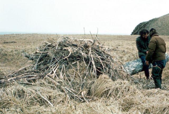 Bald Eagle Nest Picture