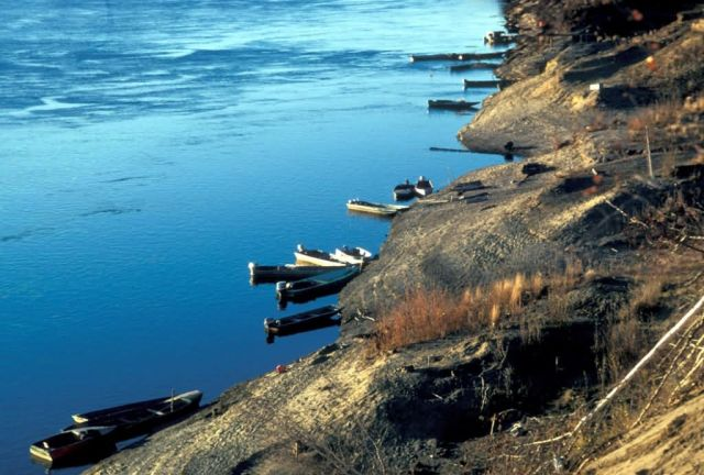 Koyukuk River Boats Tied to Shoreline Picture