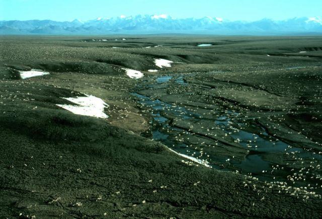 1002 Area: Porcupine Caribou Herd Picture