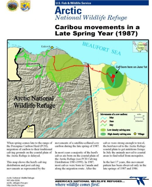 Information map: Caribou calving and summer use in high snow spring Picture