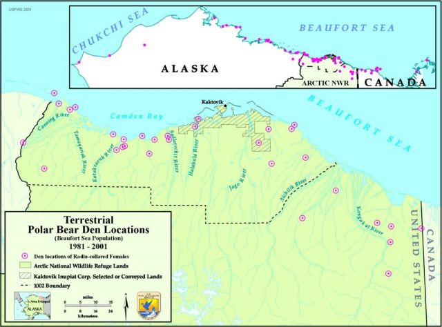 Information map: Polar bear denning 1981-2001 Picture