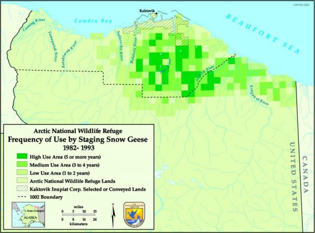 Information map: Snow goose fall use 1982-93 Picture