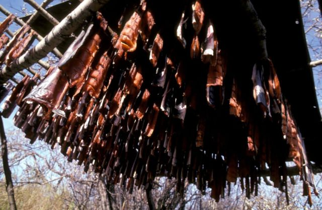 Salmon on Drying Racks Picture