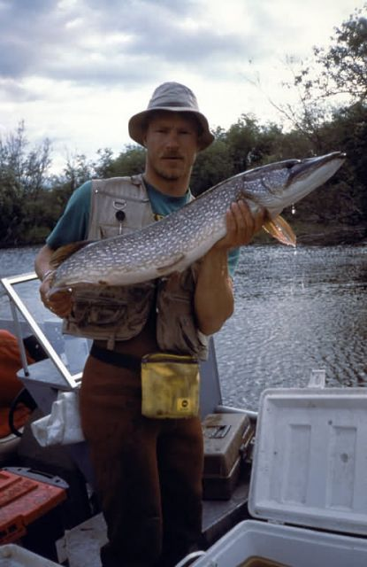 Fisherman Holding a Northern Pike Picture