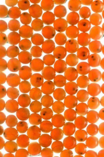 Salmon Egg Picture