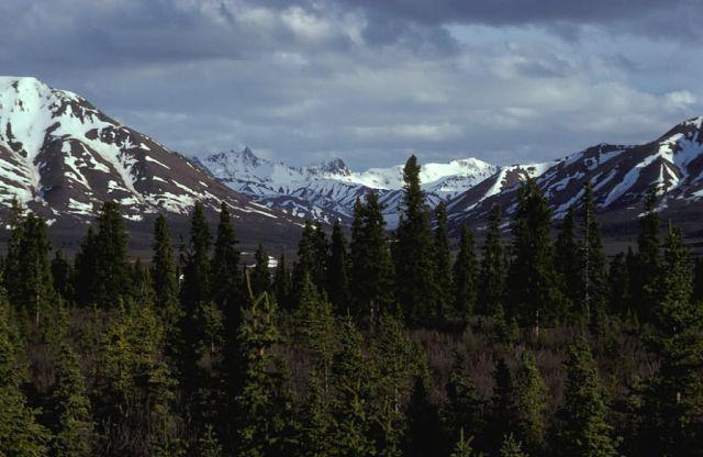 Alaska Range and Savage River Picture
