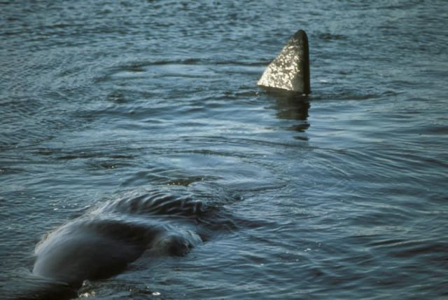 Sperm Whale Picture