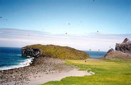 Bogoslof Island Fur Seal Colony Picture