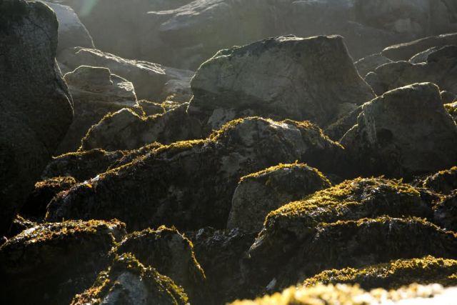 Chowiet Island beach kelp Picture