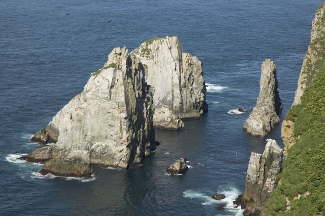 Chowiet seabird colonies Picture