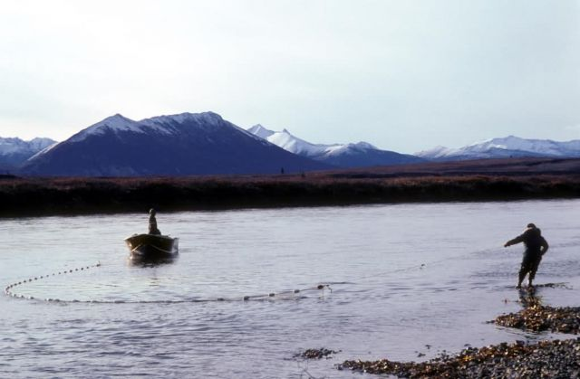 River Beach Seine Fishing on Togiak River Picture