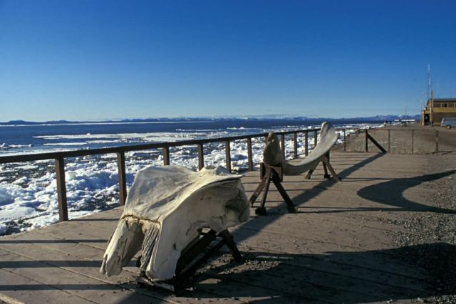 Kotzebue Waterfront and Whale Skull Picture