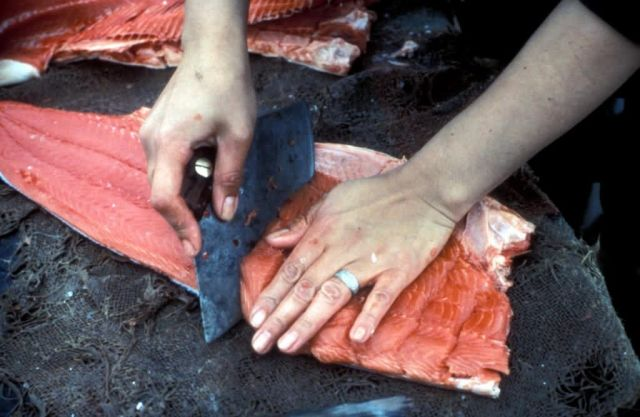 Processing Salmon Picture