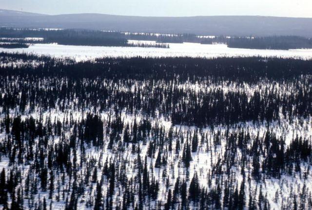 Innoko River Basin in Winter Picture