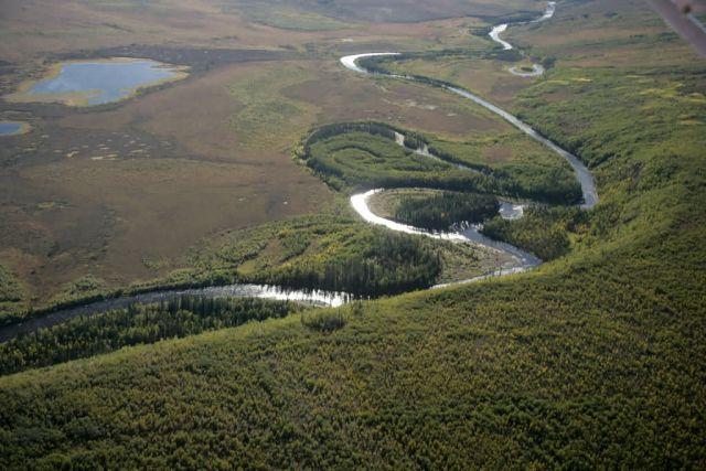 Kanuti River oxbows Picture