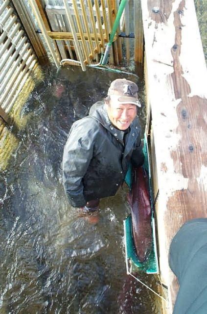 Biological Technician Sampling Chinook Salmon Picture