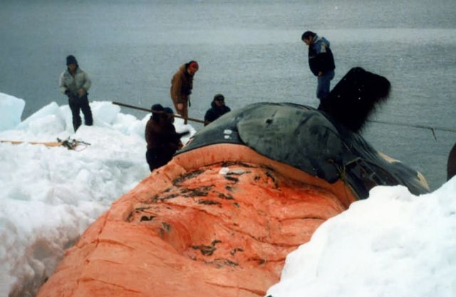 Whale Butchering Picture