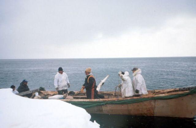 Walrus Hunters In Skin Boat Picture