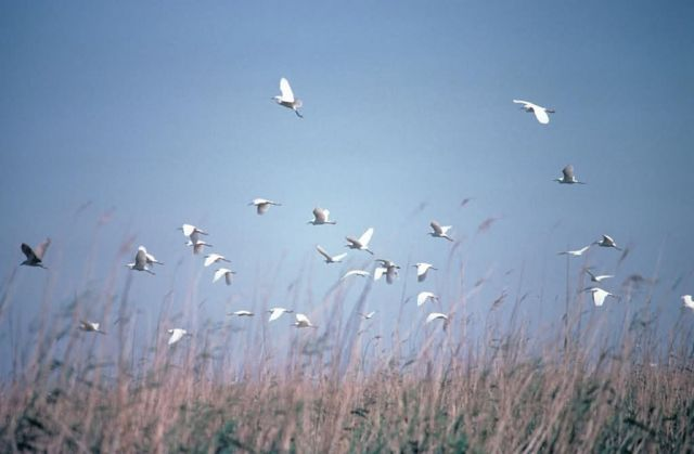 Egret Rookery Picture