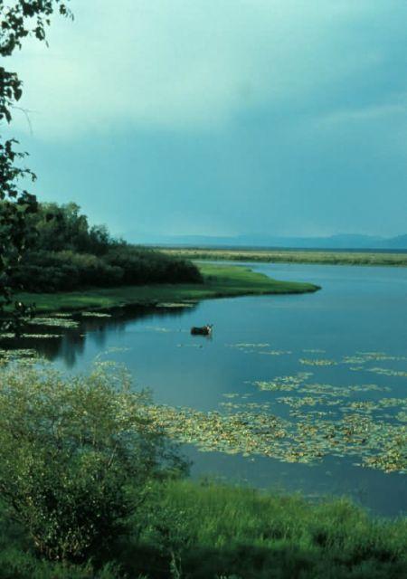 Kanuti Lake and Moose Picture