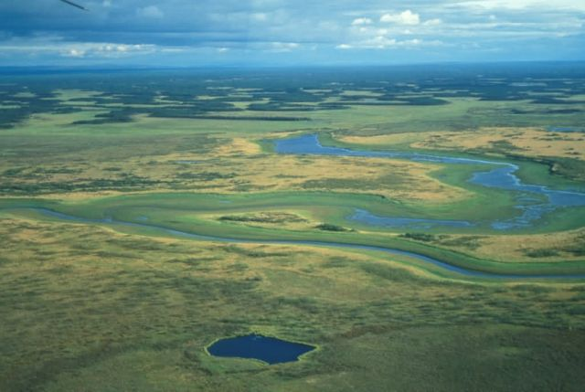 Wetlands in the Innoko Refuge Picture