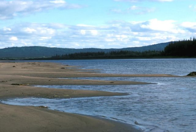 Koyukuk River Sandy Shoreline Picture