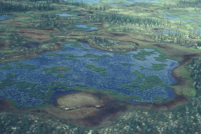 Bog Lakes and Recent Forest Burn Picture