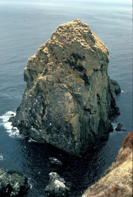 Semidi Islands Northern Fulmar nesting habitat, Picture