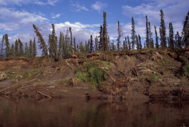 Area of Permafrost Along Innoko River Picture