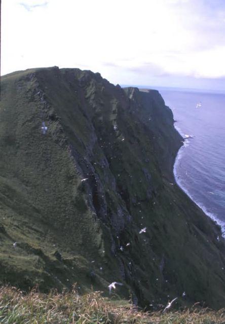 St. George High Bluffs, Pribilof Islands Picture