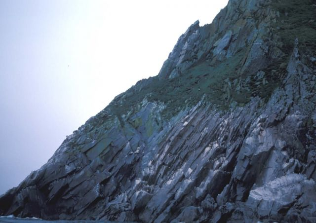 Sledge Island Bird cliffs Picture