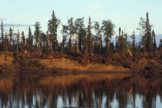 Kanuti Refuge Riverbank Picture