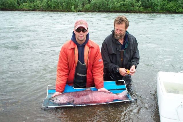 Measuring a Chinook Salmon on the Kwethluk River Picture
