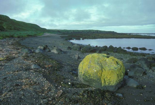 Adak Island, Lichen covered rock on beach Picture