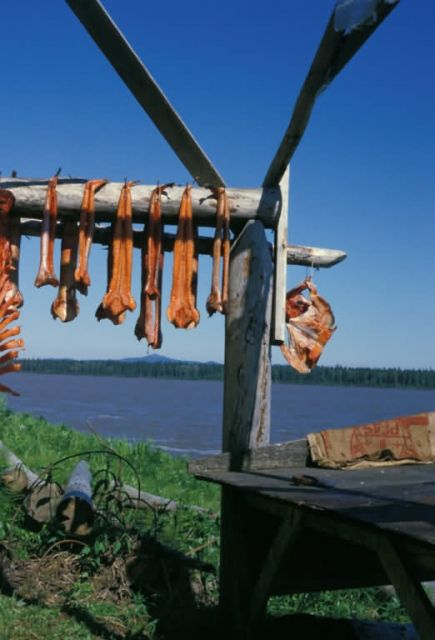 Salmon Drying on Racks at Kaltag Picture