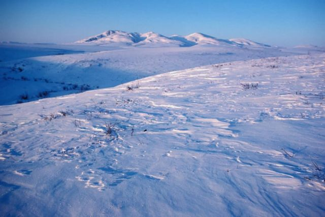 Noatak River Winter Landscape Picture